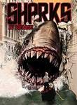 Shark in Venice Poster