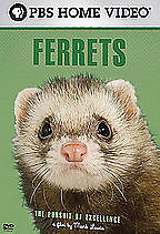 Ferrets - Pursuit Of Excellence