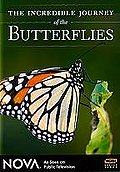 Nova - The Incredible Journey of the Butterflies