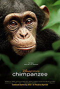 Chimpanzee poster & wallpaper