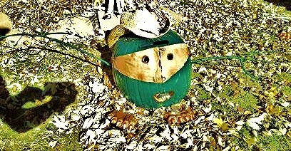 My cowboy monster pumpkin I made.