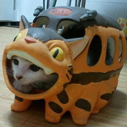 Hey! That's not Catbus!